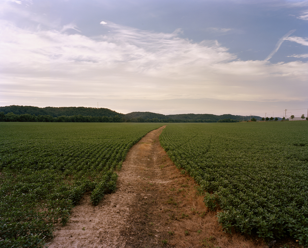 Soybean Field, Buffalo, WV, 2012