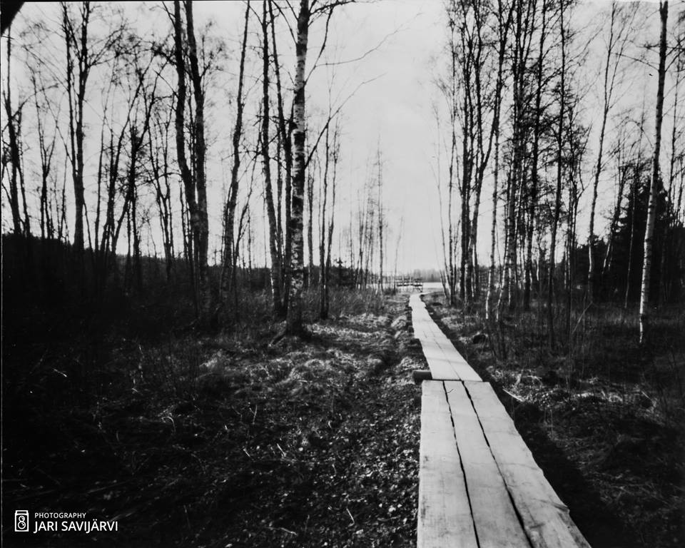 Wooden Path , made with 4x5 pinhole camera and lith film.