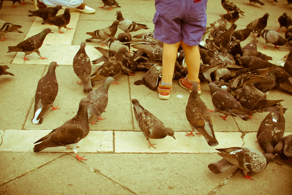 Feeding Time, St. Mark's Square
