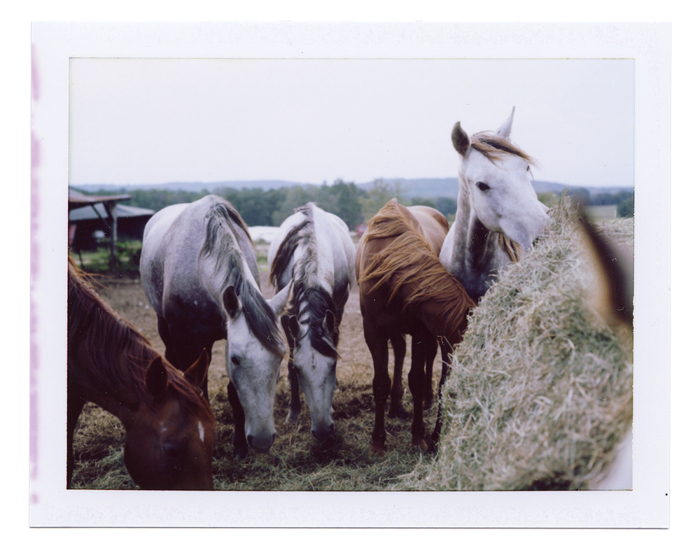 Horses, Plato, MO, Benjamin Hoste