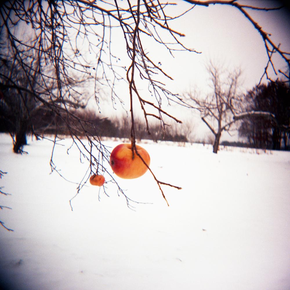 Winter Apple ,  Aline Smithson