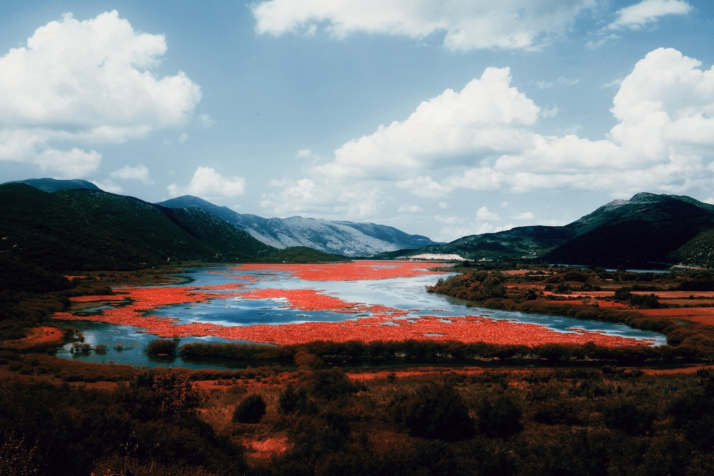 Red Delta ,  Felicia Simion