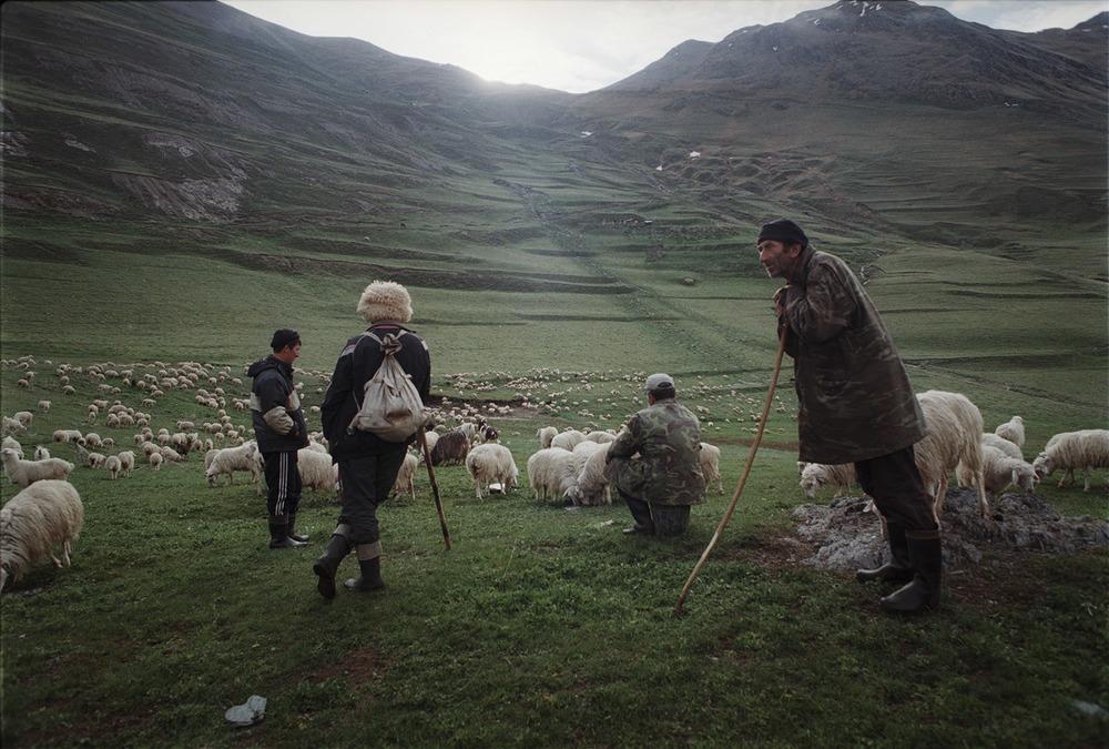 Four Shepherds