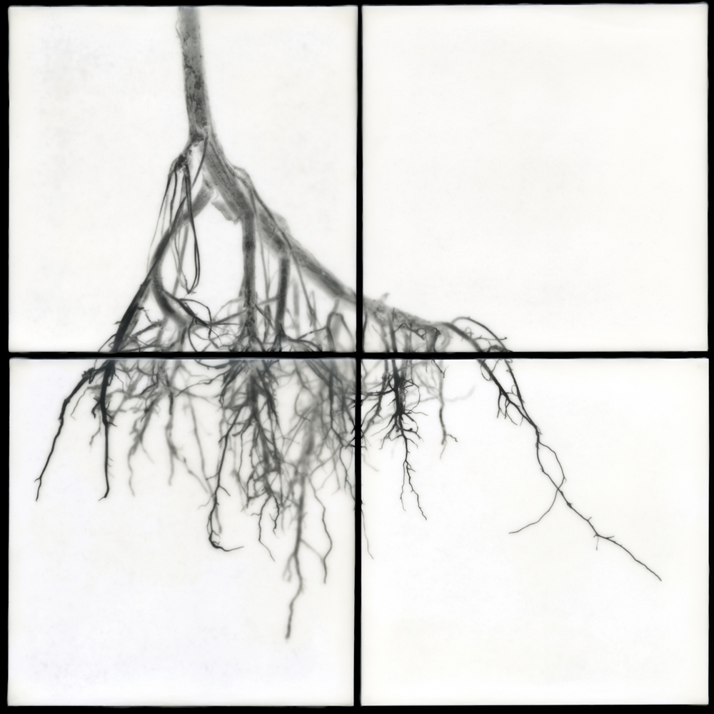 Roots ,  Christa Bowden