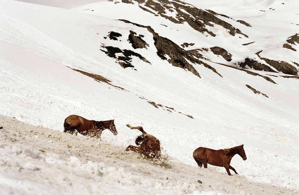 Three Horses Taking the Path to Tusheti Mountains