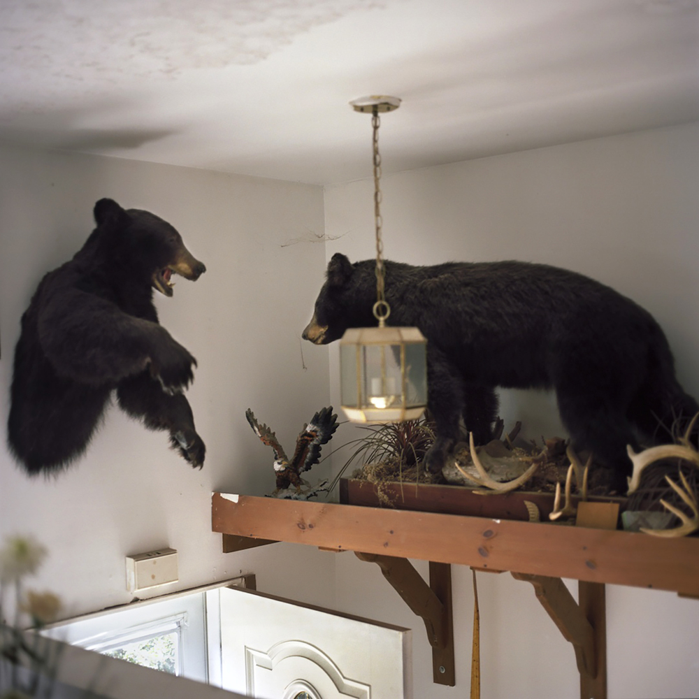 Bears, 2011, Todd Danforth