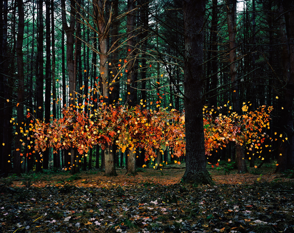 Leaves no. 1, Napanoch, New York, 2011 ,  Thomas Jackson