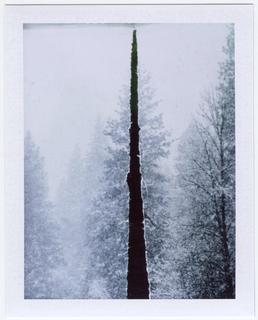 Fractured (when a tree falls) ,  Serrah Russell