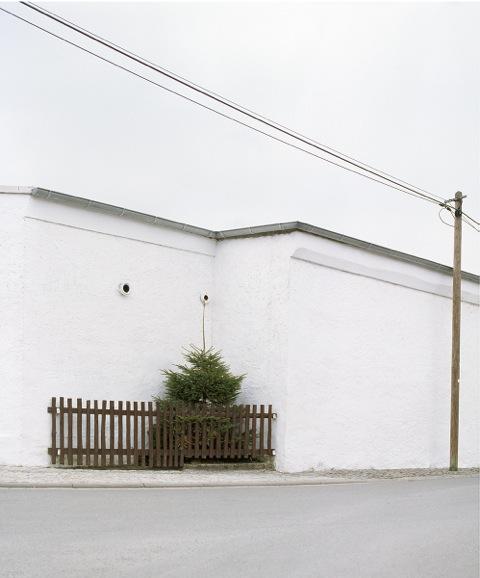 Corner With Tree