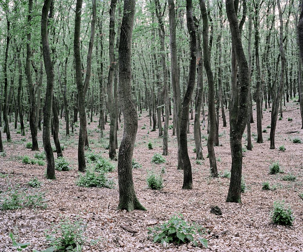 Green Bushes ,  Daniel Kovalovszky