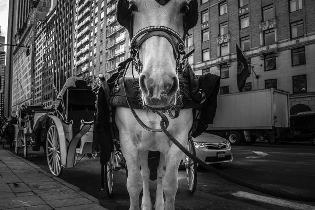 The White Horse,   Cristina Brandi