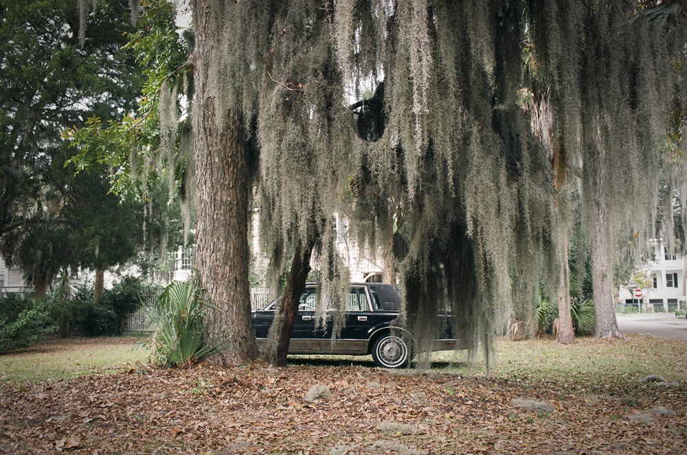 Cadillac Under Moss ,  Charlotte Strode