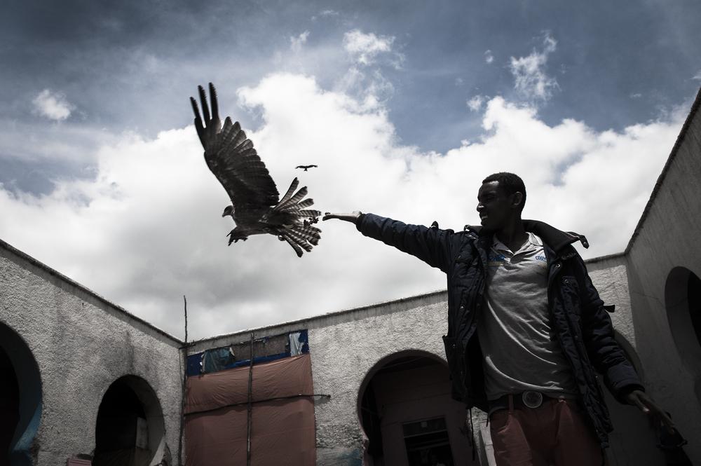Harar Meat Market, Ethiopia, 2014 ,  Chris Grodotzki