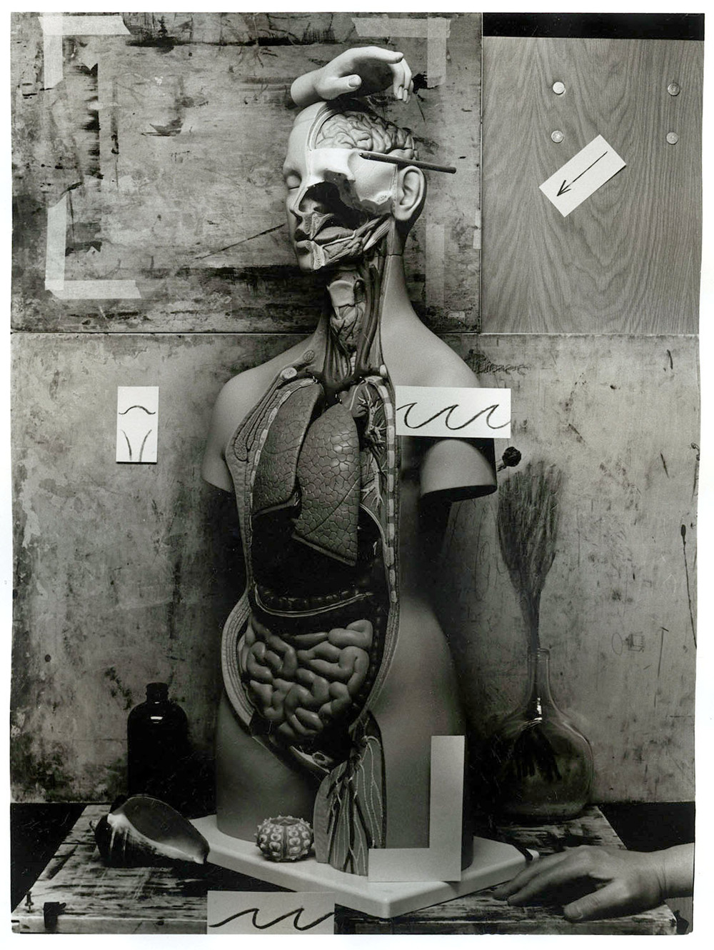 Anatomy  from the series  Across Disciplines ,  Adam Finkelston