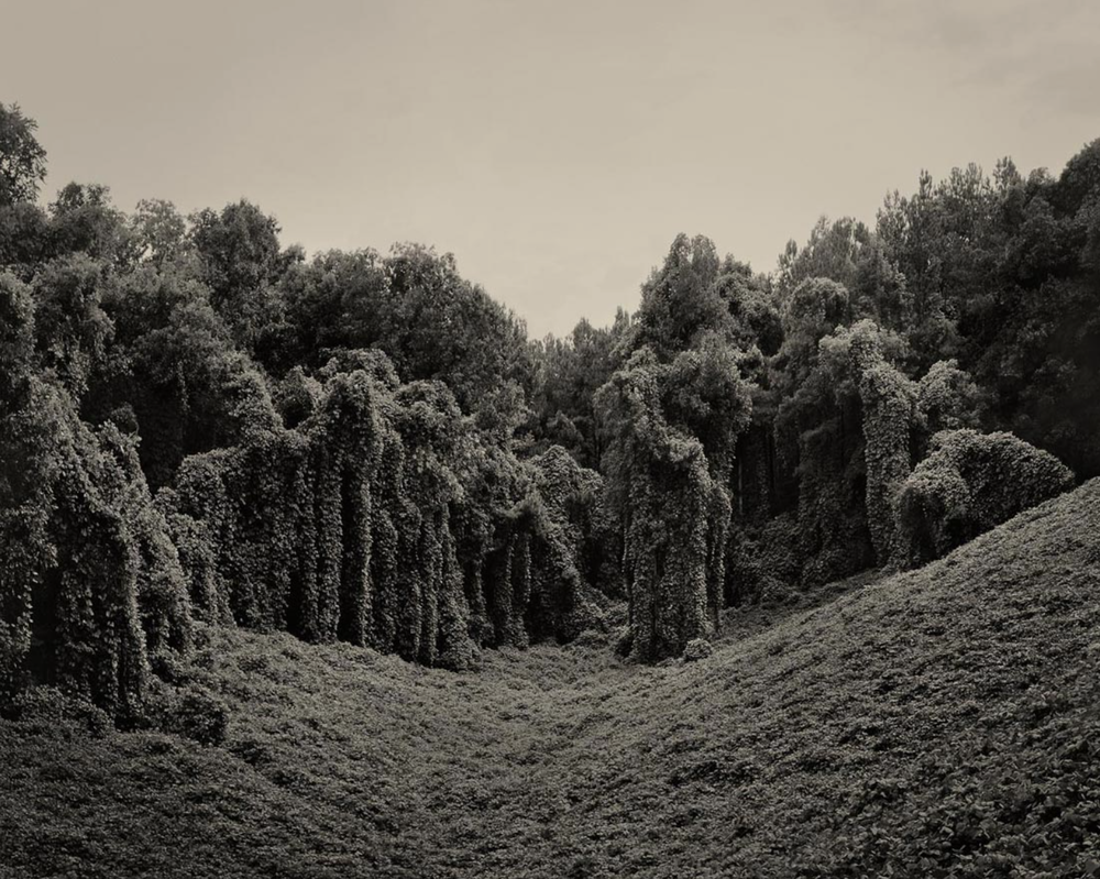 Kudzu Project: Alabama Fields
