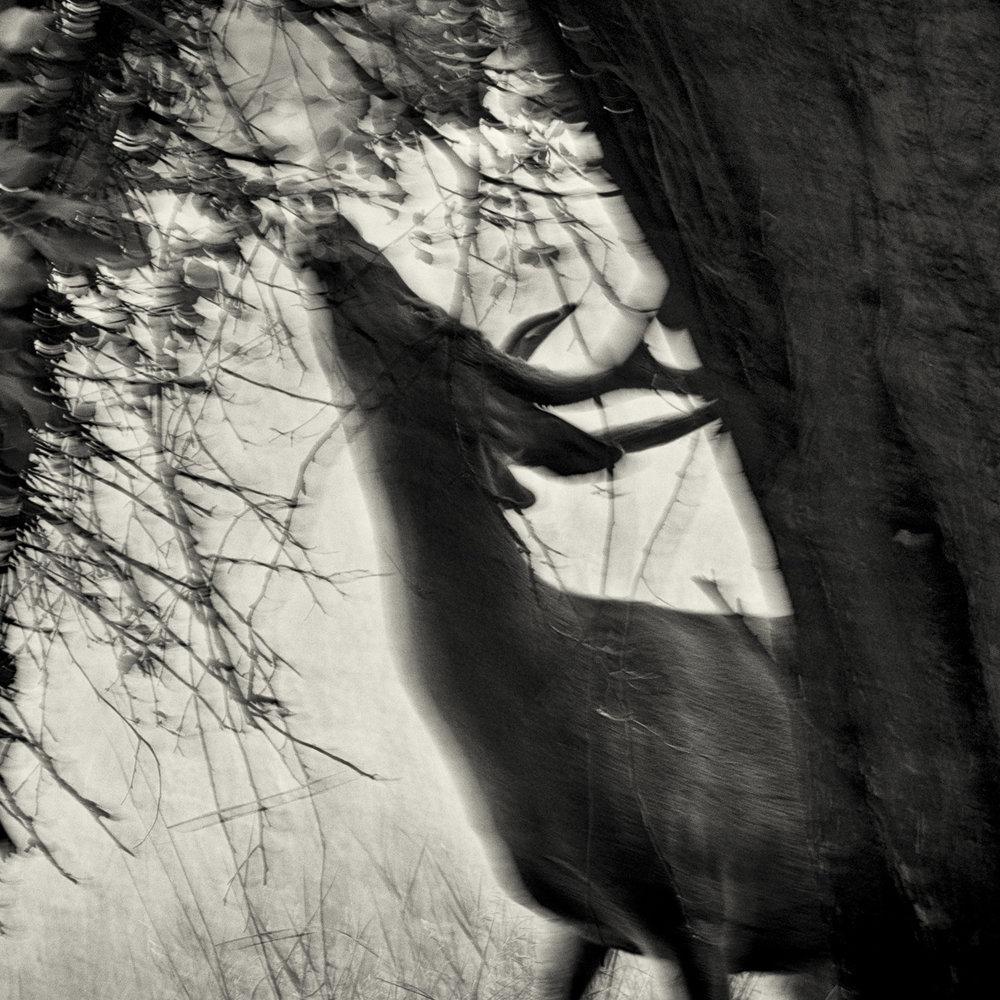 Misthaven #9 ,  Amy Kanka Valadarsky