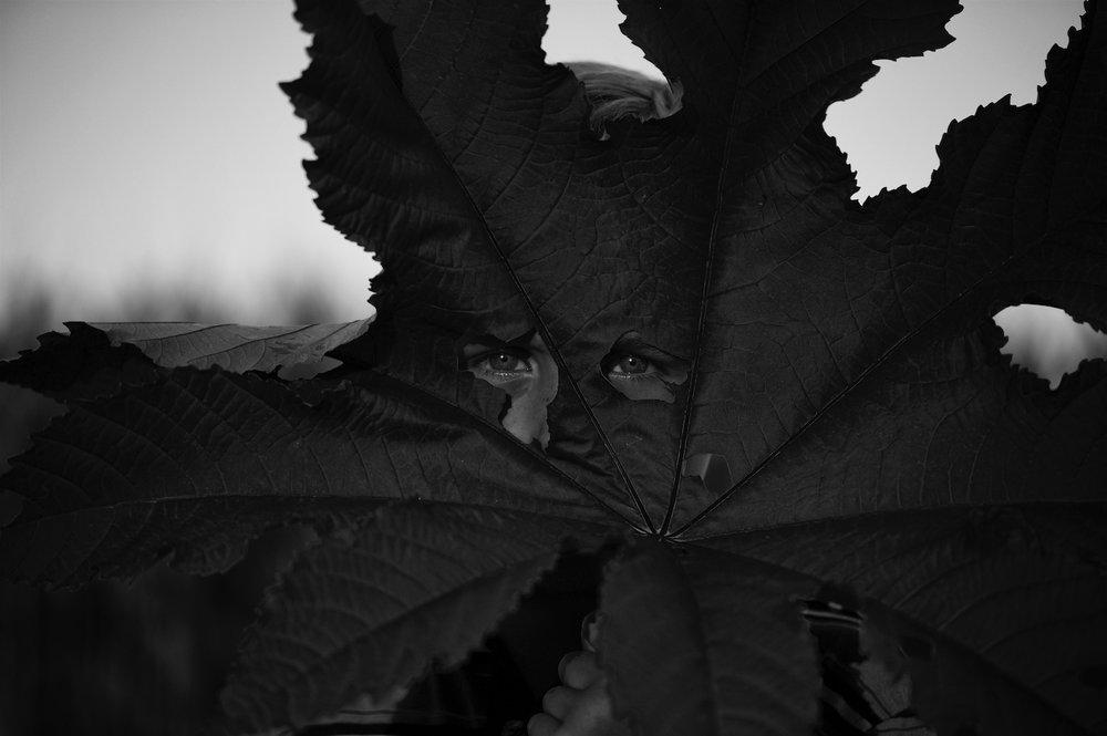 Castor Leaf , Tytia Habing