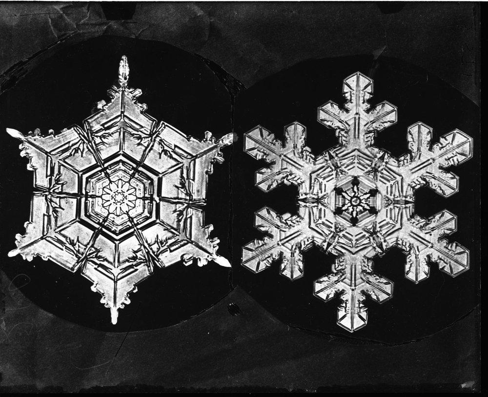 analysis caldecott snowflake book bentley illustration
