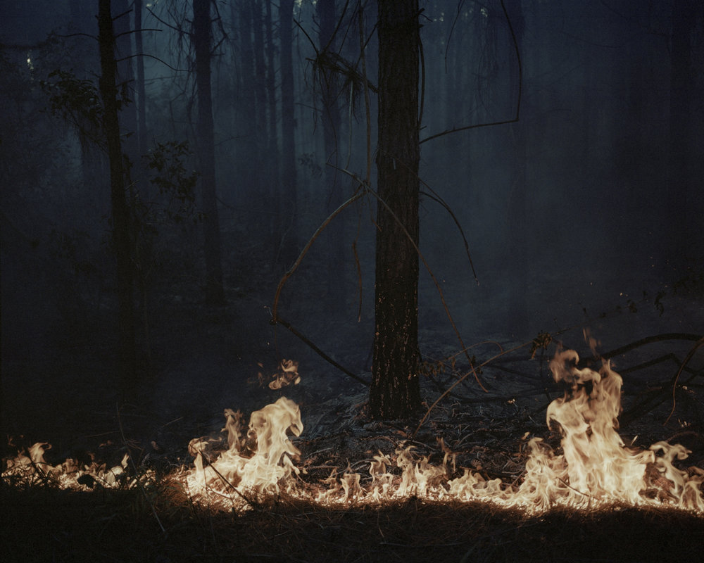 Fire in the Forest #1, 2014  from the series  Indefinitely ,  Katrin Koenning