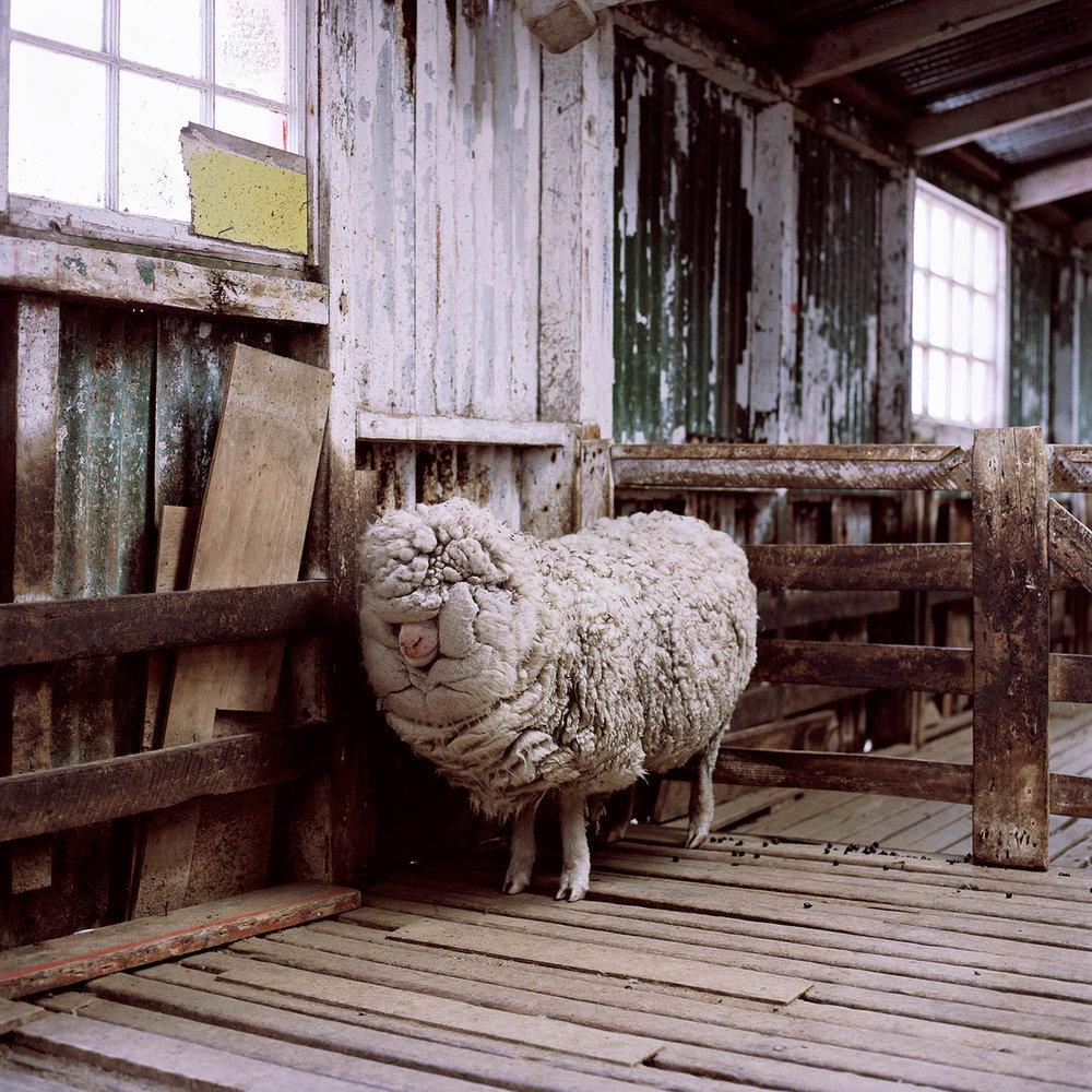 Double Fleece, Jon Tonks