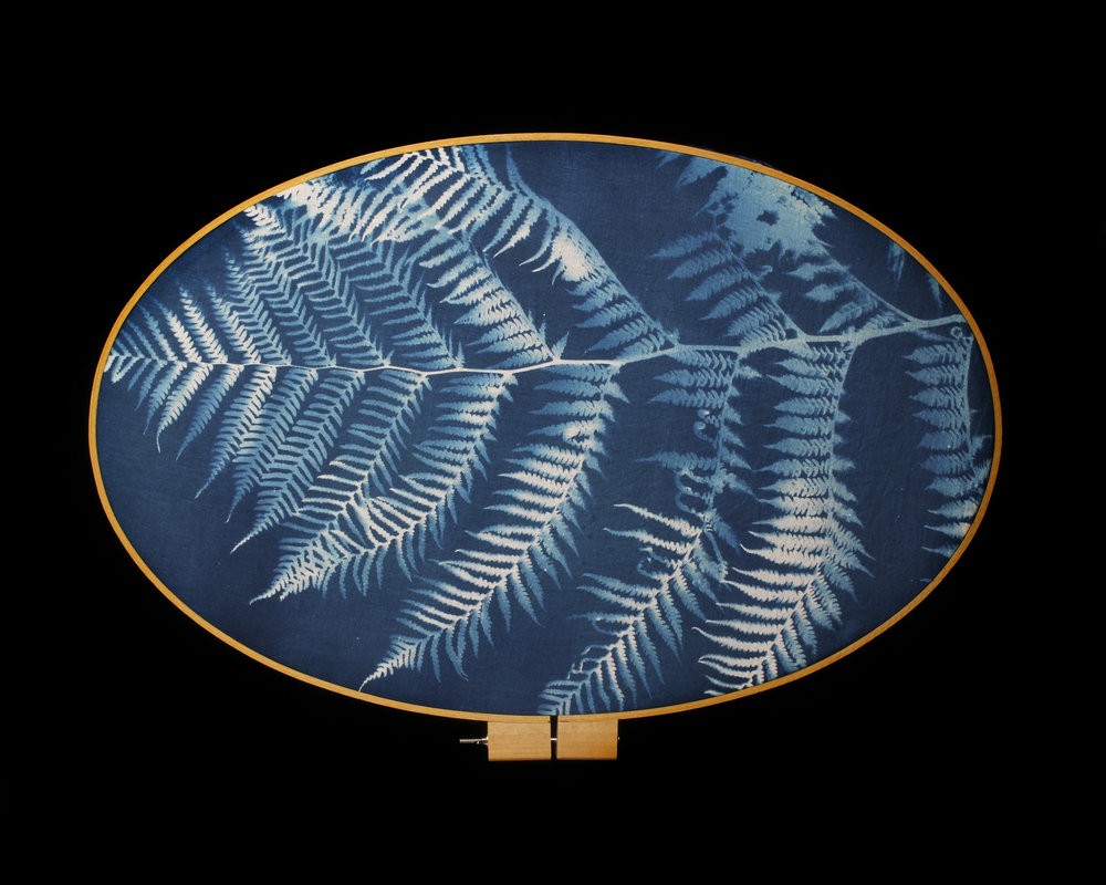 Heidi Kirkpatrick, Tree Fern, 2015. Cyanotype.
