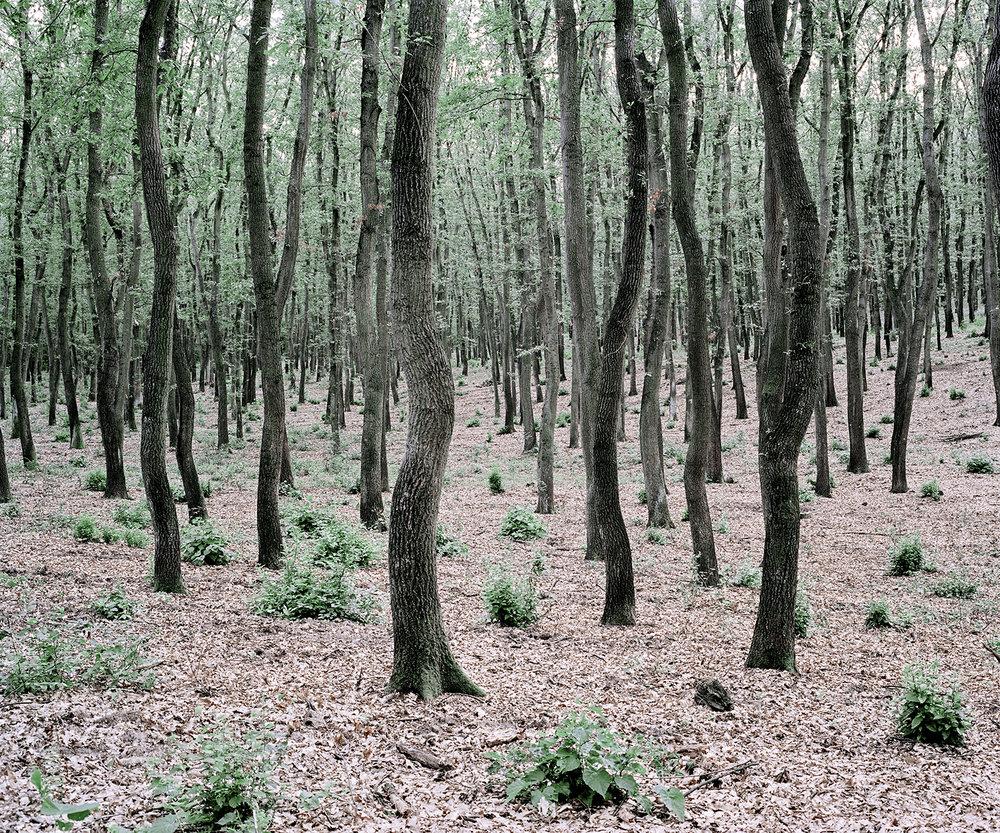 Green Bushes, Hungary