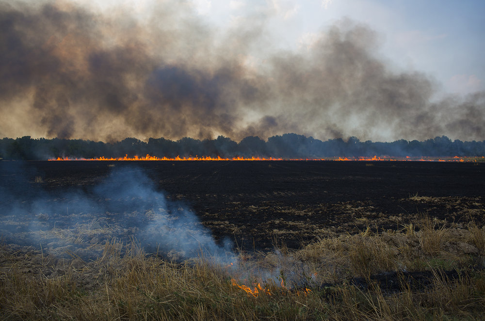 Mississippi Burning Field, Clarksdale, MS