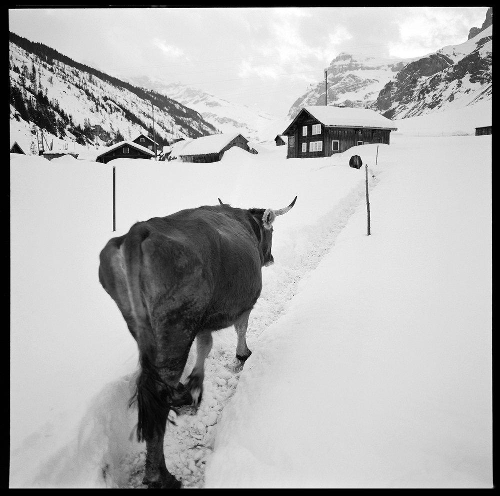 Berglandwirtschaft im Winter
