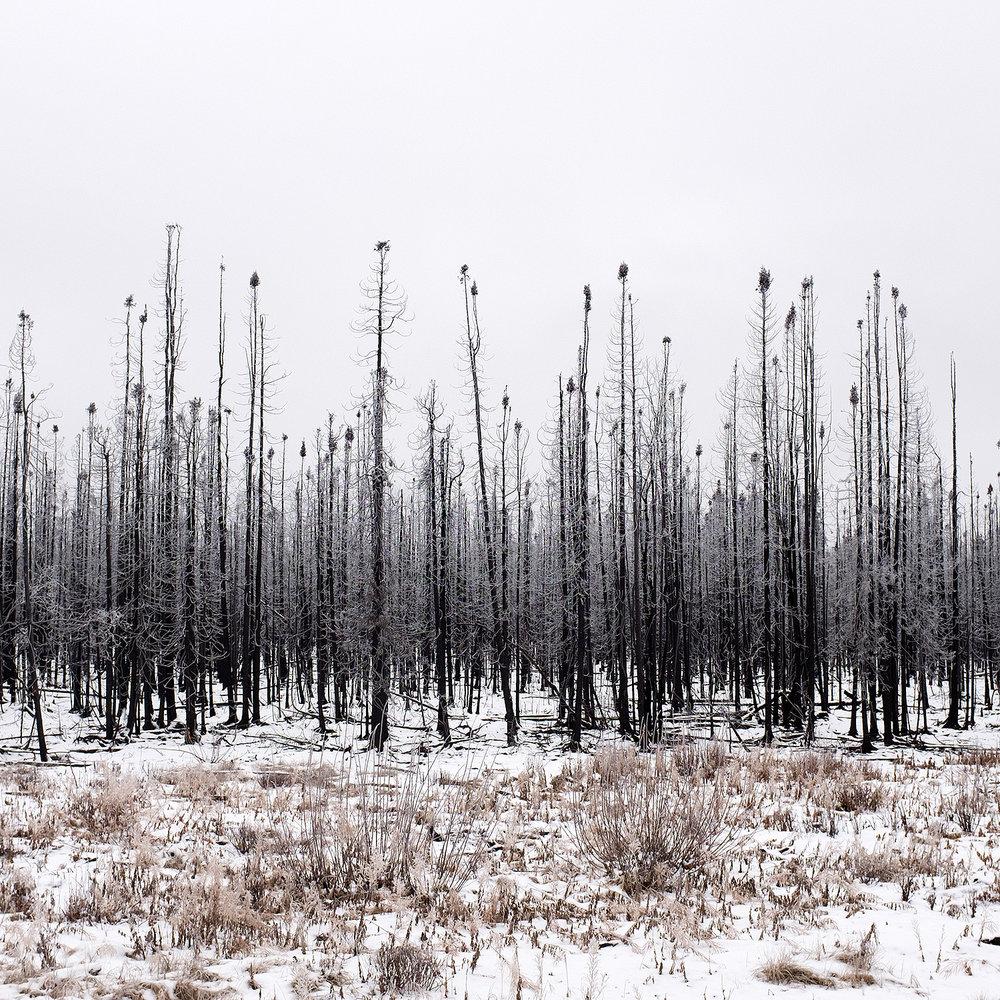 2015 Willow Fire, Willow, AK ,  J. Jason Lazarus
