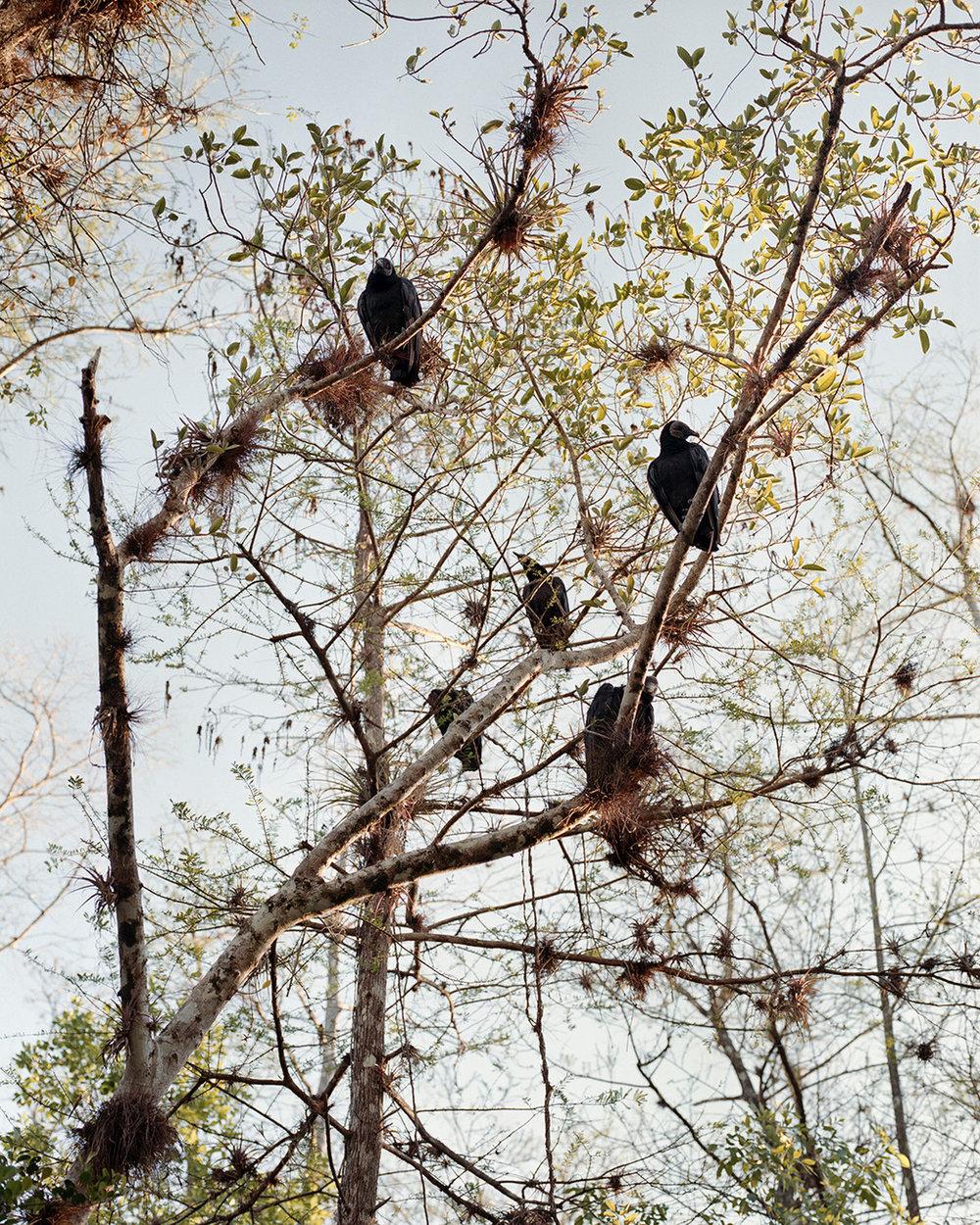 Vultures, First Light ,  Dylan Johnston