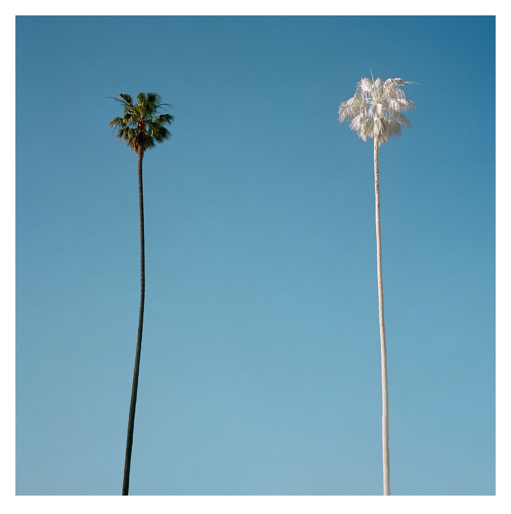White Palm, 2015 ,  George Byrne