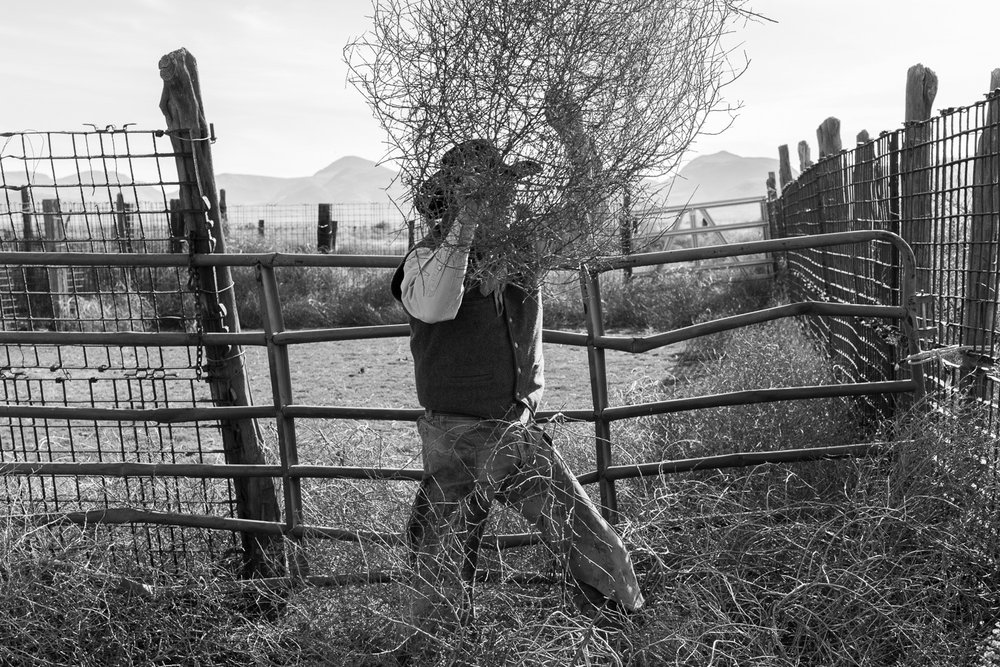 Bodie Means clearing tumbleweed from a range corral, December, 2015, Joseph Vitone
