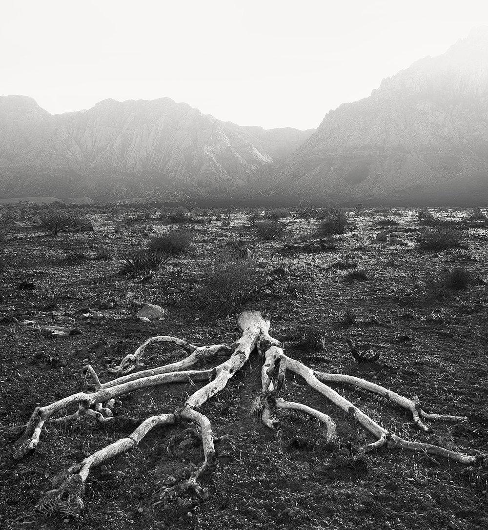 Dead Joshua Tree, Las Vegas ,  Norm Halm
