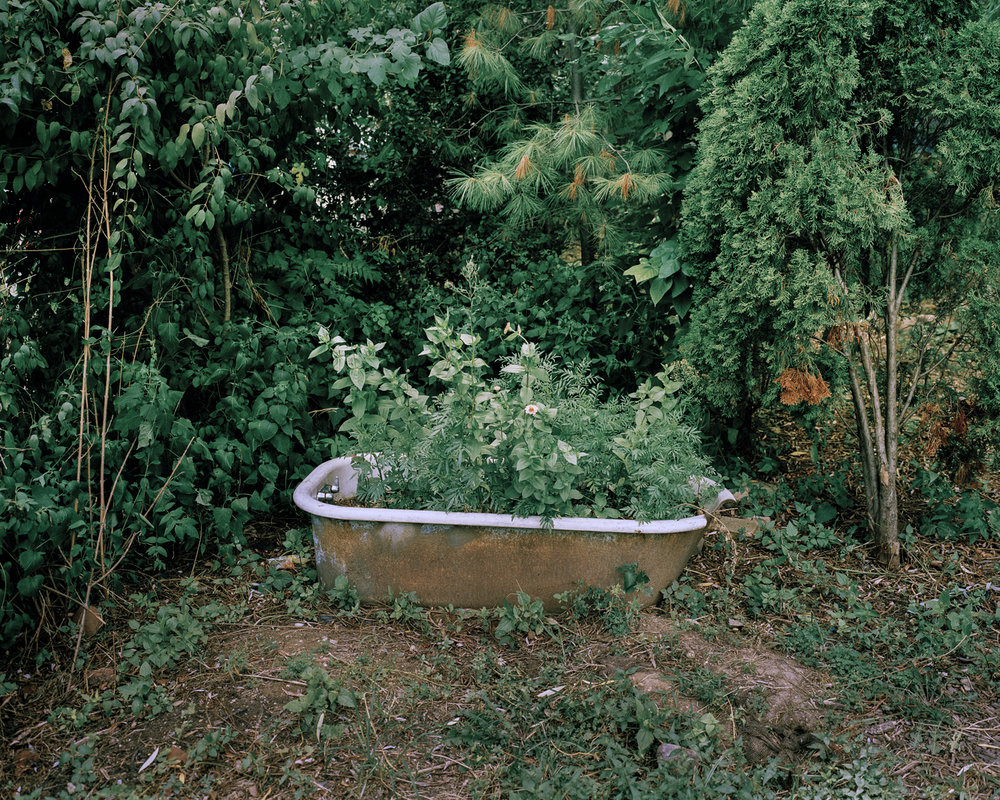 Untitled from the series The Gardener, Jan Brykczynski