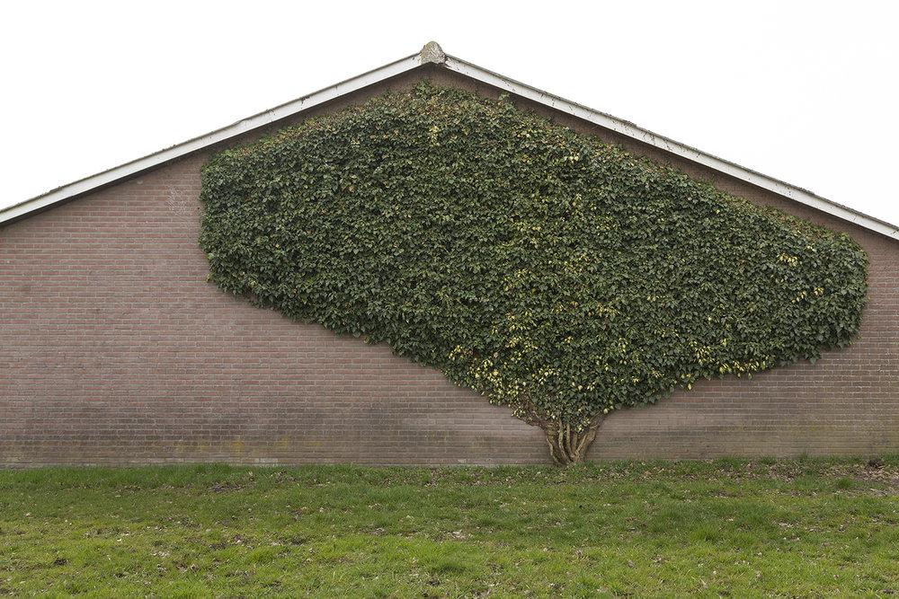 Flat Tree ,  Rikkert Harink