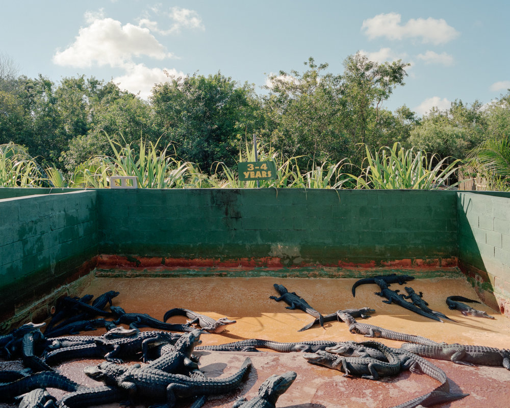 Florida City, Florida (Everglades National Park)  from the series  Frontiers ,  Scott Sheffield