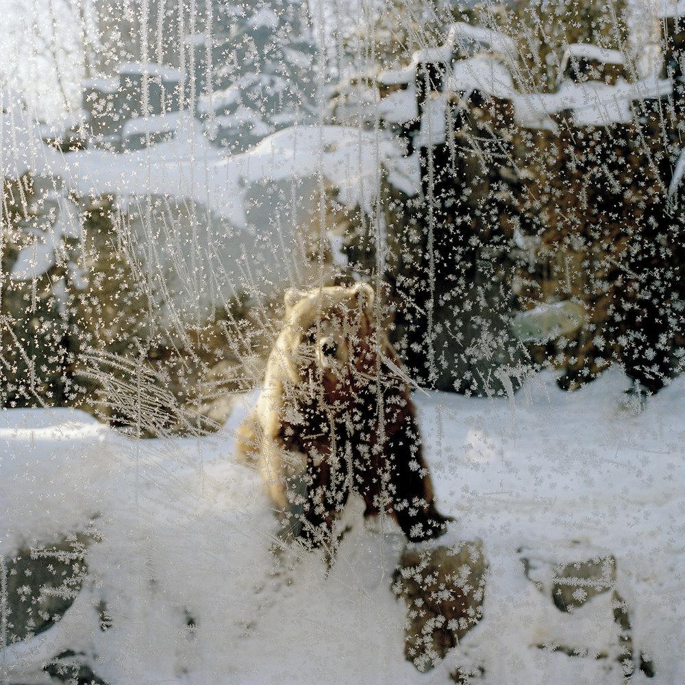 Lake Superior Zoo, Duluth, MN #1 ,  Areca Roe