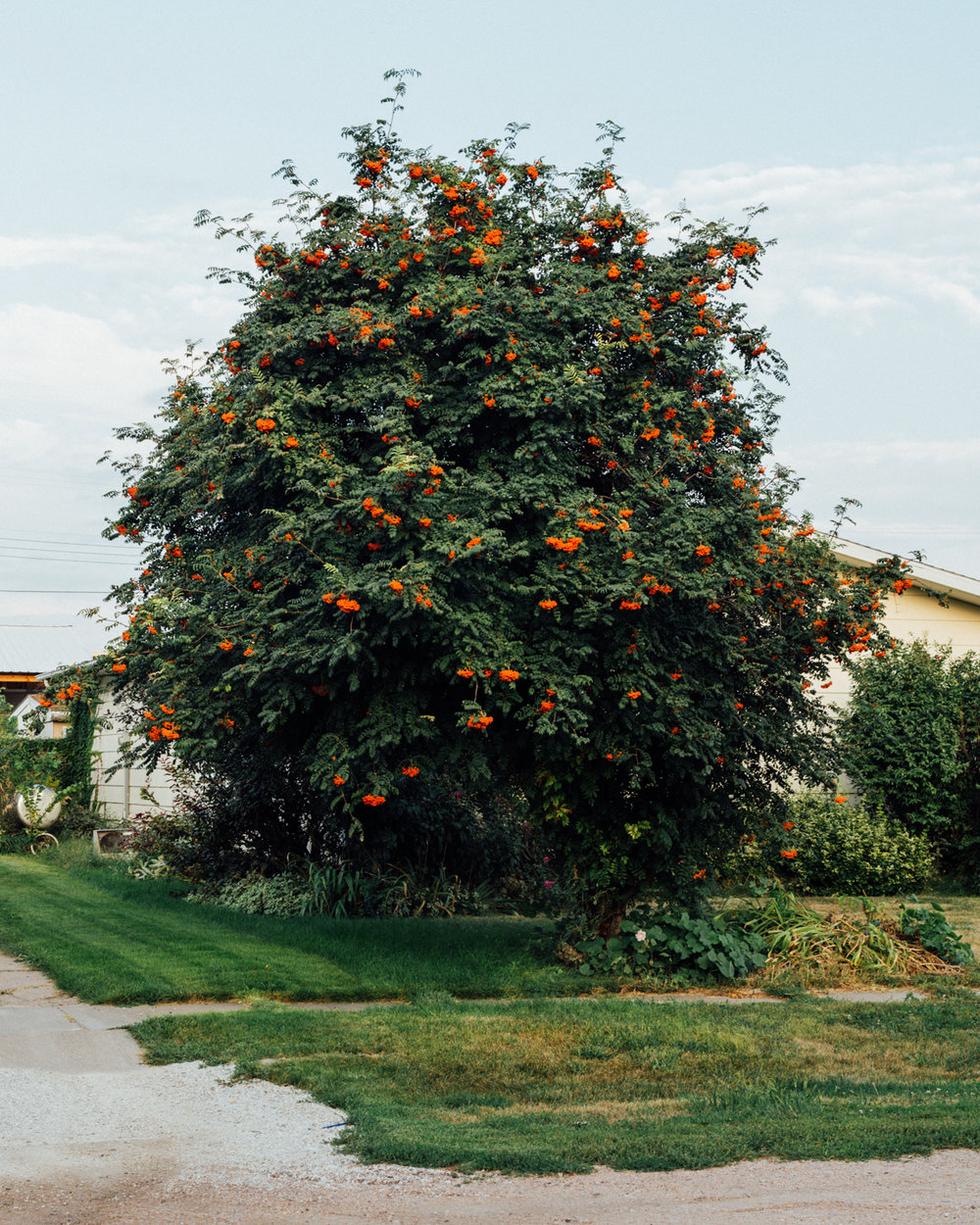 Untitled (Orange Blossoms) from the series Fade Like a Sigh, Zora J. Murff & Rana Young