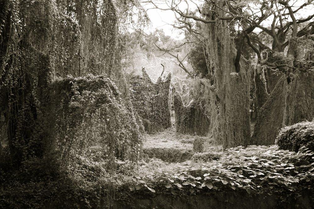 """Bosque """"Magico"""" de la Habana: Untitled VIII,   Conrad Gees"""
