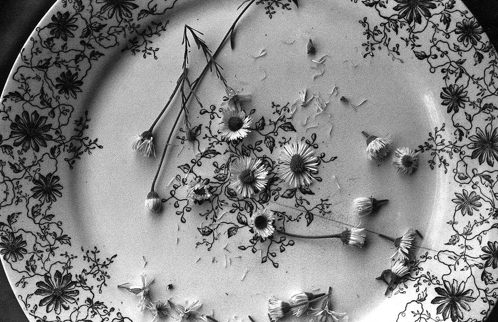 Wild Flowers , Angelica Petryshyn