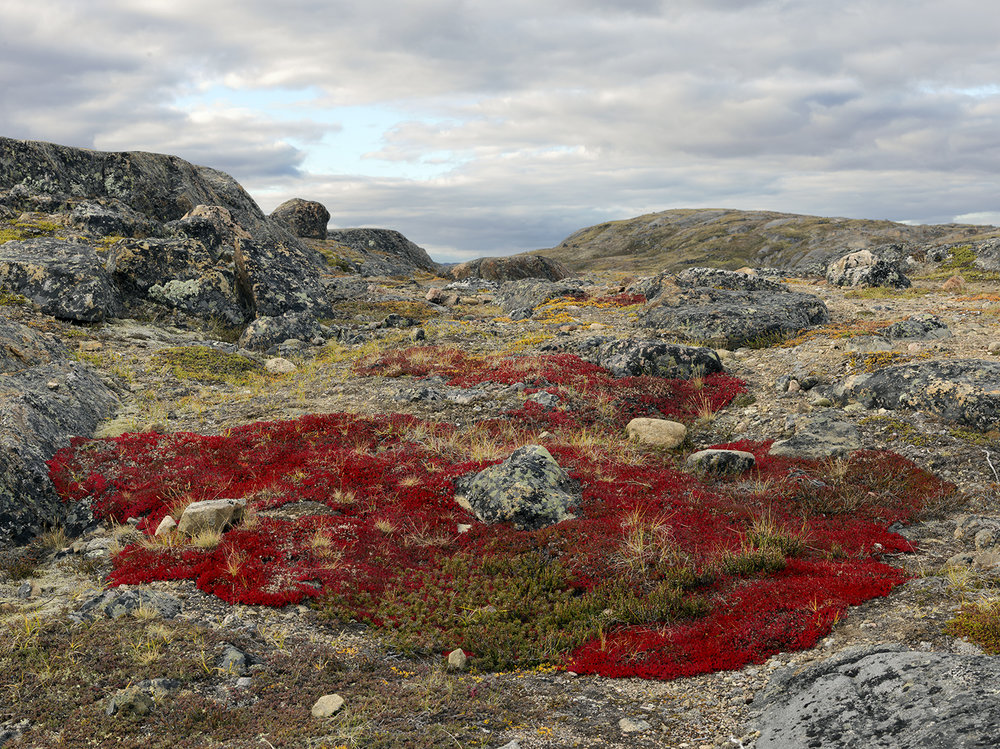 Flora Growing on the Tundra, Sylvia Grinnell Territory Park, Iqaluit, Nunavut, Canada, 2016 ,  Dave Jordano