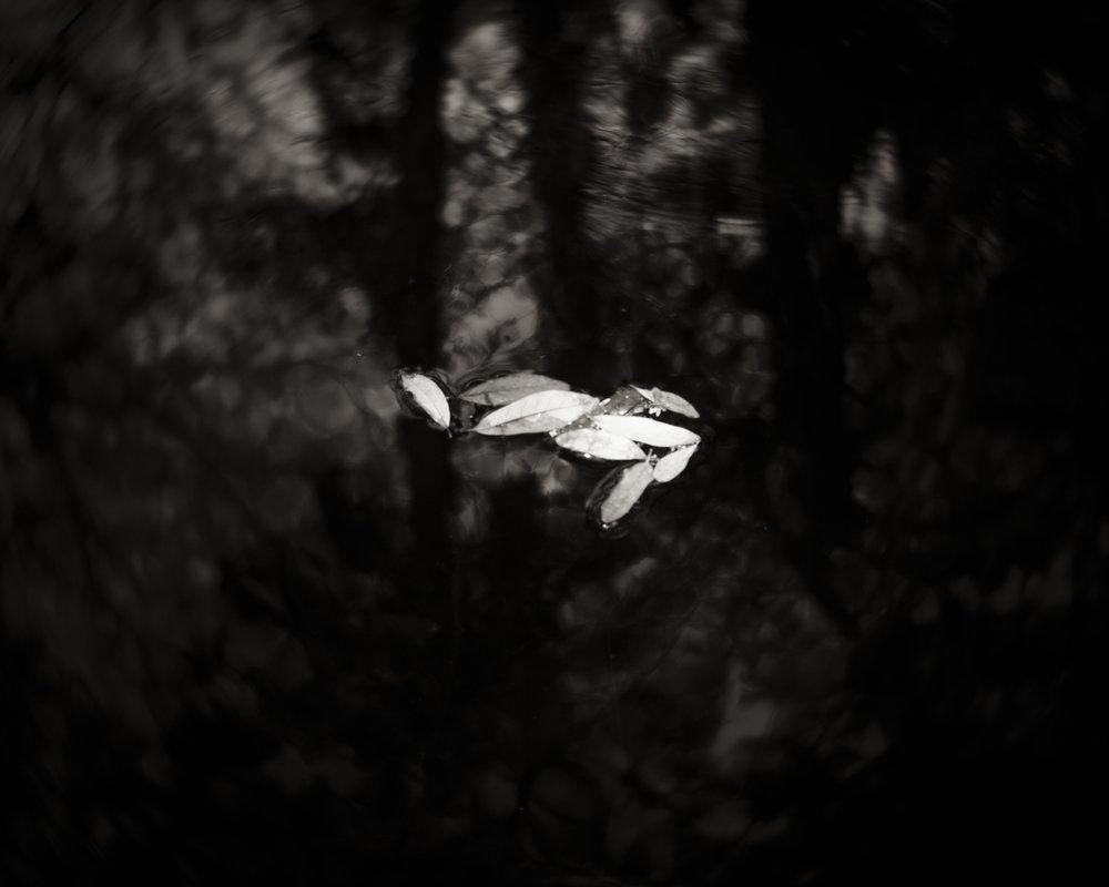 Leaves Adrift