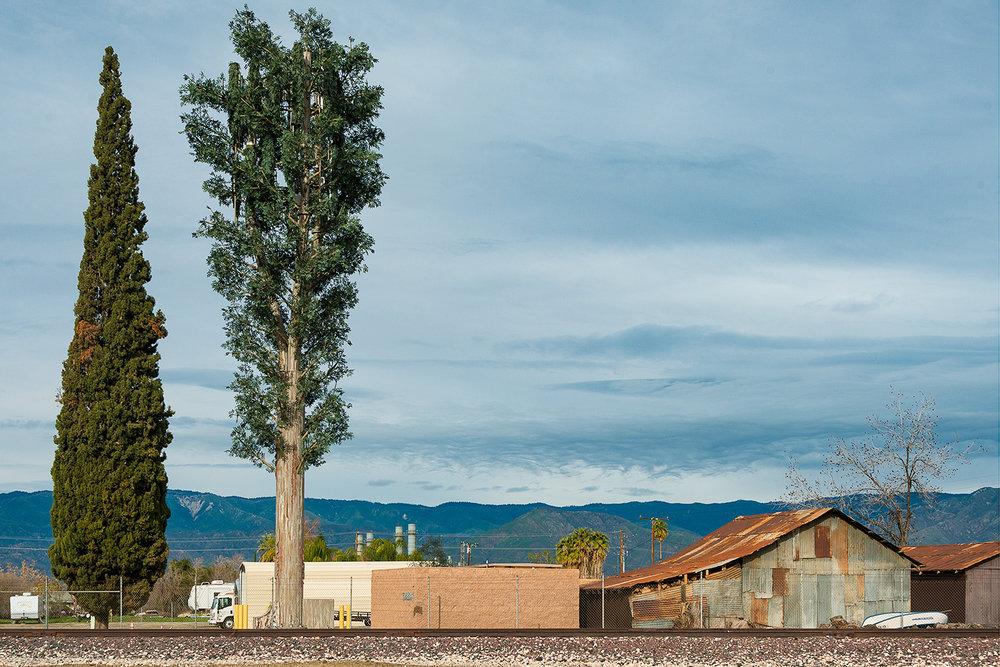 Fauxliage—San Bernadino Eucalyptus,   Annette LeMay Burke