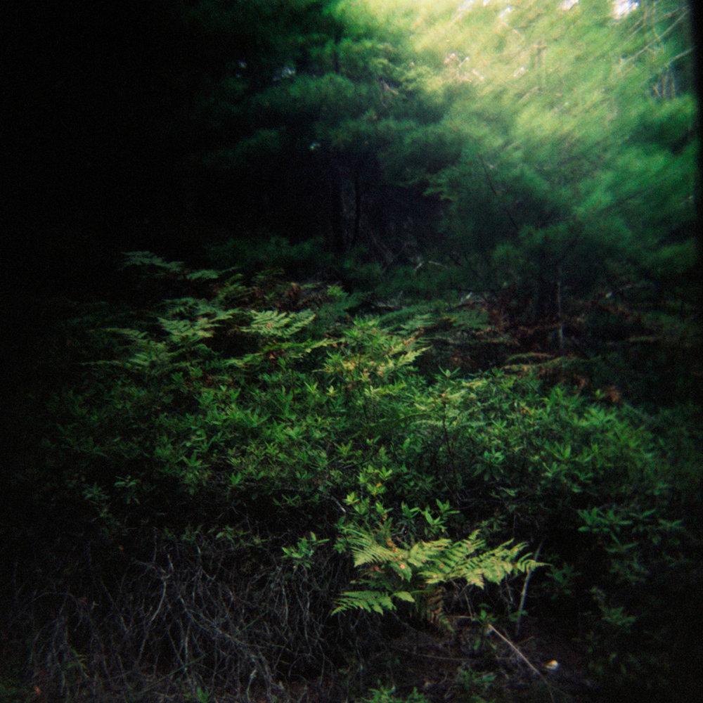 Acadia National Park ,  Dennis Stein