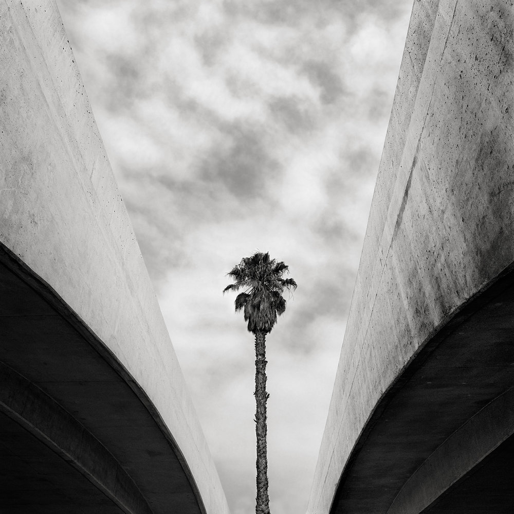 Palm and Overpass, David Paul Bayles