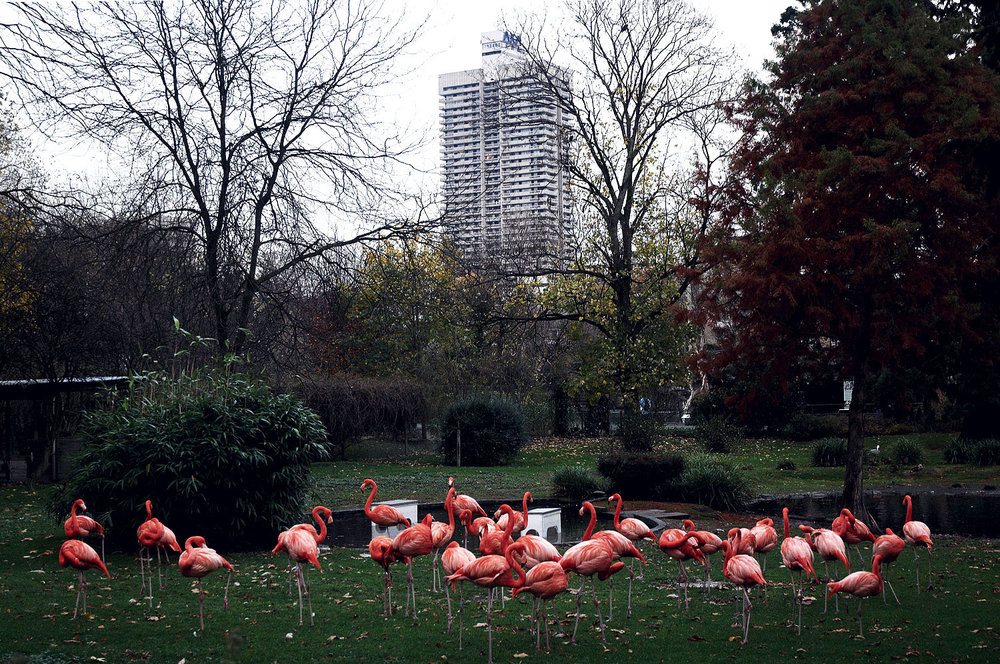 Flamingos  from the series  Modern Wilderness ,  Daniel Zakharov