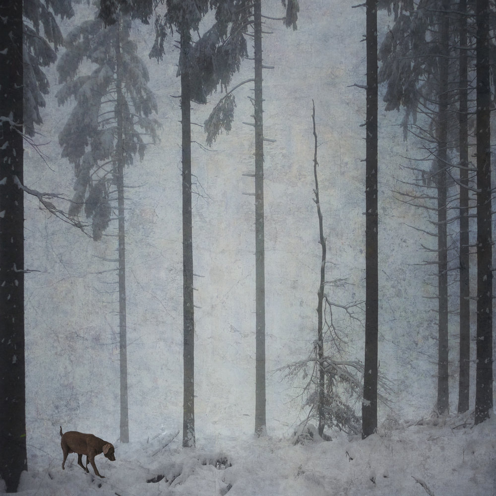Dog, Fog, and Snow ,  Bernd Webler