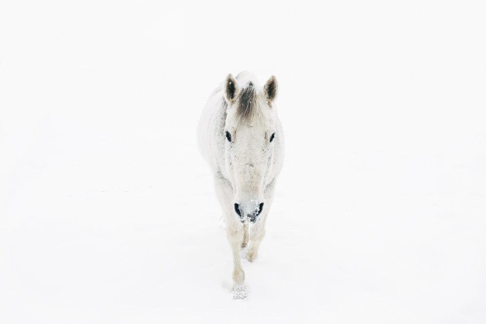 White ,  Sarah Boccolucci