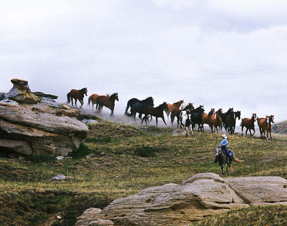 Bucking Horse Round-Up ,  Todd Korol