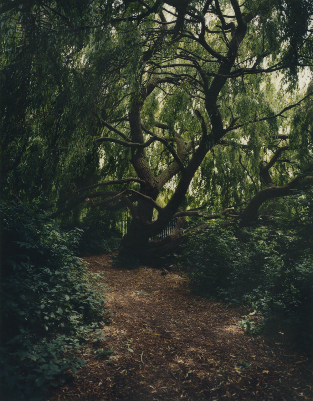Leaning Tree  from the series  Inside the Spider ,  Suzie Howell